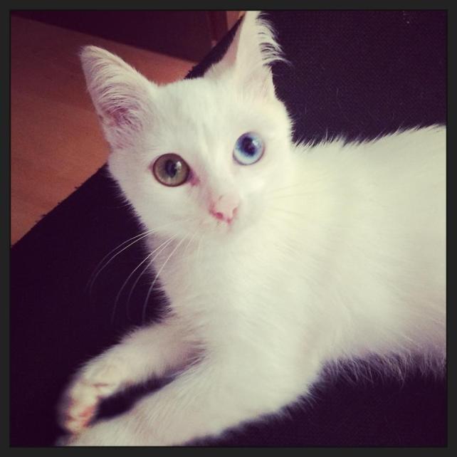 cat stray white mary